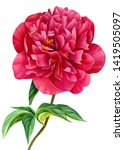 burgundy peonies on an isolated ...   Shutterstock . vector #1419505097
