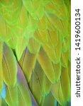 macaw wings  buffon's macaw ...   Shutterstock . vector #1419600134