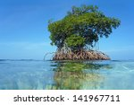 Mangrove Tree Islet Viewed Fro...