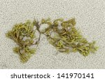 Seaweed On Sandy Beach