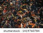 japanese colourful carp fish... | Shutterstock . vector #1419760784