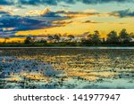 Colorful Sunset In Pantanal ...