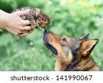 A Big Dog And A Little Kitten...