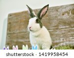 grey bunny rabbit looking... | Shutterstock . vector #1419958454