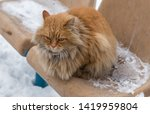 red shaggy cat on a snowy bench | Shutterstock . vector #1419959804