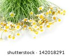 many chamomile isolated on white | Shutterstock . vector #142018291