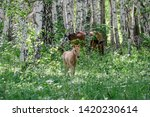 Foal Graz In The Wood With A...