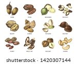 hand drawn set of 12 edible nuts | Shutterstock .eps vector #1420307144