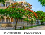 red flowers trees at  boulevard ... | Shutterstock . vector #1420384001