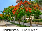 red flowers trees at  boulevard ... | Shutterstock . vector #1420449521