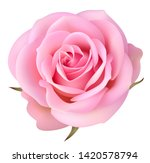 decorative pink rose isolated... | Shutterstock .eps vector #1420578794