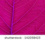 leaf color. isolated with a ... | Shutterstock . vector #142058425