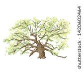 Unique Live Angle Oak Tree