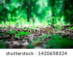 small rock and grass in the... | Shutterstock . vector #1420658324