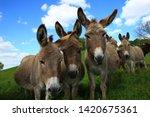 Miranda Donkeys Intrigued By...