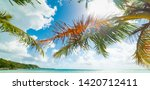 Palm Trees In Pointe De La...