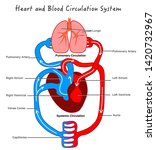 blood circulation system.... | Shutterstock .eps vector #1420732967