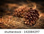 Fir Cones On The Forest Floor...