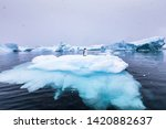gentoo penguin alone on iceberg ... | Shutterstock . vector #1420882637