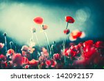 poppies at night