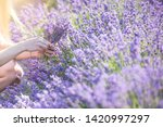 a girl with long hair collects... | Shutterstock . vector #1420997297