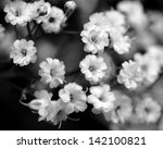 Black And White Flowers  Baby'...