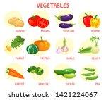 bright vector illustration of... | Shutterstock .eps vector #1421224067