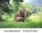 Elephant Mother And Baby In...
