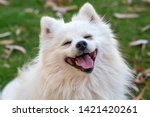 Stock photo pet animal cute dog in garden 1421420261