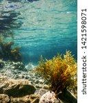 Forest Of Seaweed  Seaweed...