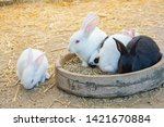 rabbits on the ground in zoo | Shutterstock . vector #1421670884
