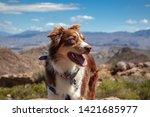 Hiking Dog With Bandana On...