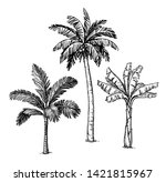 ink sketch of palm trees.... | Shutterstock .eps vector #1421815967