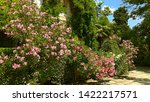Building abounding in vine dense foliage & surrounded with gorgeous Pink & White Oleander shrubs, partially covering trimmed green bushes in a botanical garden on a sunny day. Mounded Oleander shrubs.