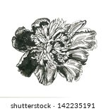 peony flower | Shutterstock . vector #142235191