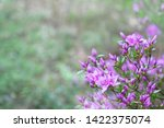 pink flowers of rhododendron...   Shutterstock . vector #1422375074