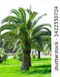 palm trees in the city park in... | Shutterstock . vector #1422550724