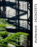 london uk  june 2019. in focus... | Shutterstock . vector #1422625571