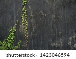natural background with place... | Shutterstock . vector #1423046594