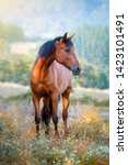 Stock photo chestnut horse standing in a meadow full of flowers at sunset 1423101491