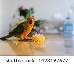 A Cute Little Parakeet Bird...