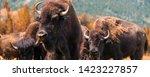 Panorama Of Herd Of Grazing...