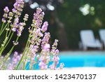lavender growing on villa house ... | Shutterstock . vector #1423470137