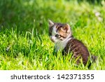 Stock photo little kitten 142371355