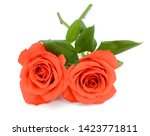 beautiful red rose flowers... | Shutterstock . vector #1423771811