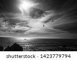 black and white oceanscape with birds flying over the water