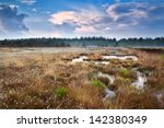 puffy cotton grass on swamp and ... | Shutterstock . vector #142380349