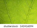 close up of green leaf texture | Shutterstock . vector #142416094