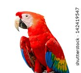 Colorful Scarlet  Macaw Aviary...