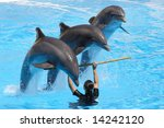 A Trio Of Dolphins Leaping Ove...